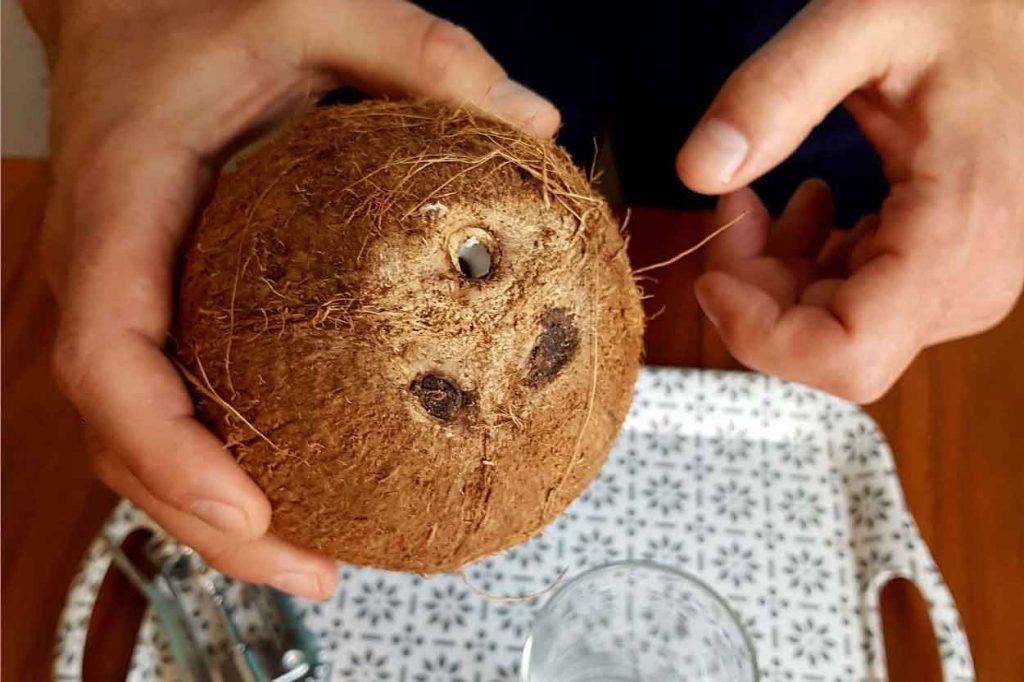 Kokosov orah 2